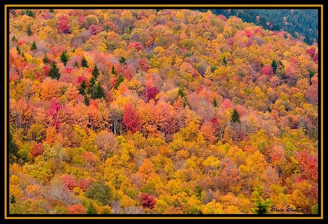 West Virginia Colors