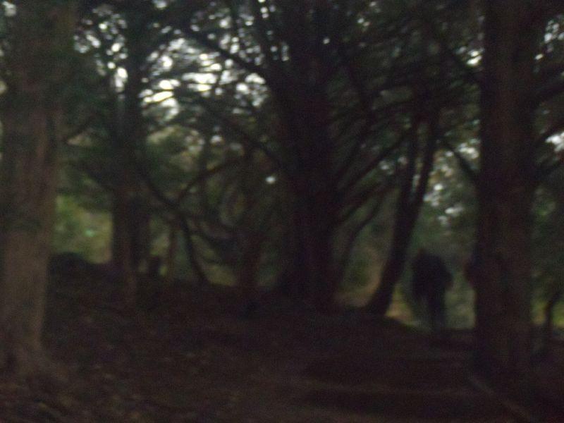Climbing up Box Hill to Leatherhead