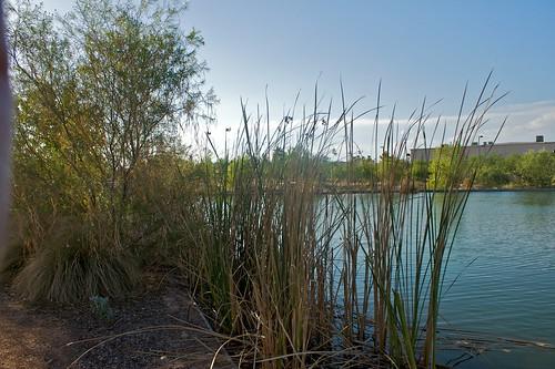 Rio Salado Habitat Restoration Project | by dbostrom