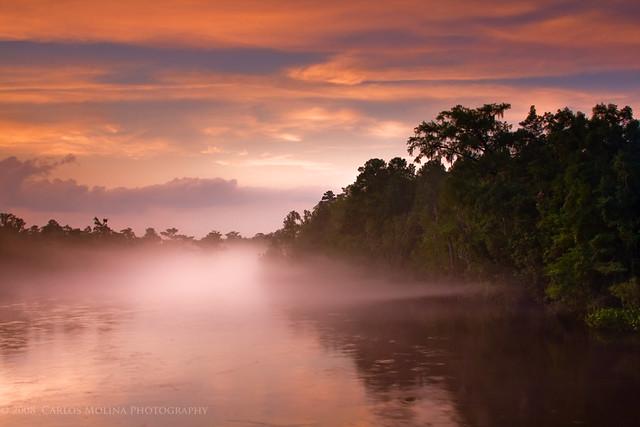 COLORS & SHAPES OF BEAUTIFUL FLORIDA