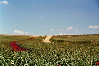 Caminos estacionales