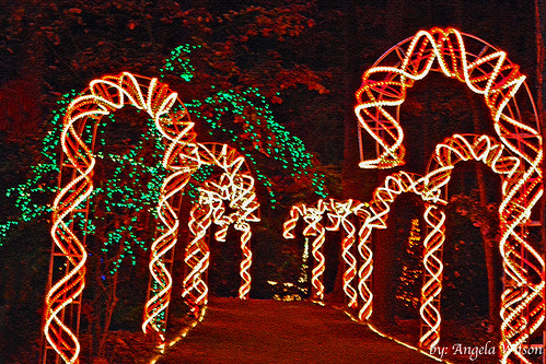 Candy Cane Path 2008 | by angeldewdrps