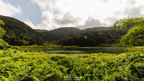 soleil eau vert rayon arbre forêt verdure guadeloupe étang basseterre canon6d samyang14mm parcnationaldeguadeloupe