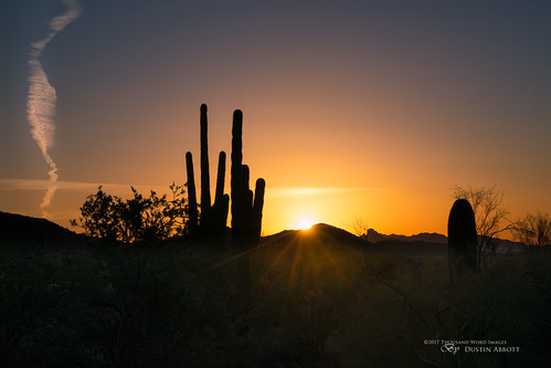 usa sunrise lens dawn adobelightroomcc 2016 christmas dustinabbottnet mountain mirrorless review 2017 silhouette thousandwordimages travel canonefm18150mmf3563isstm photography camera ontario adobephotoshopcc arizona canoneosm5 comparison photodujour dustinabbott scottsdale unitedstates us saguaro