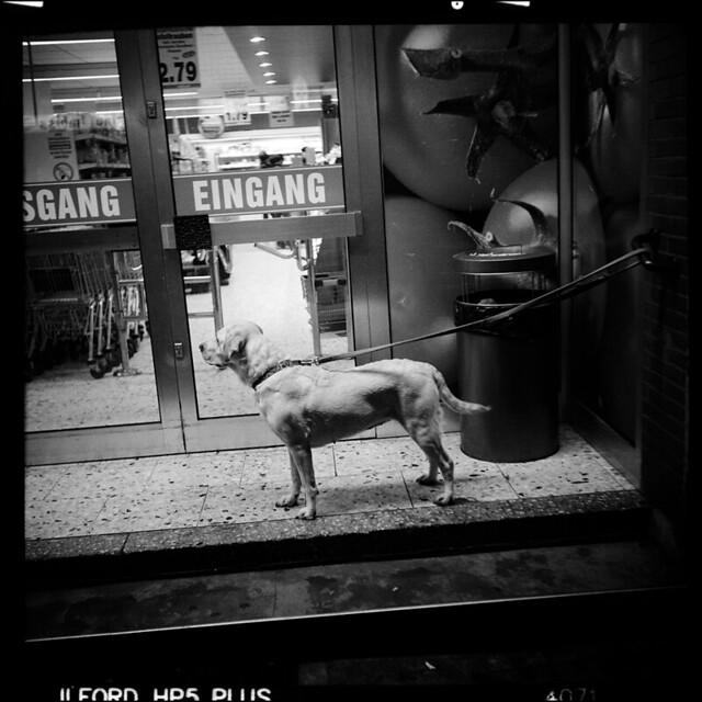 Hund / 2013
