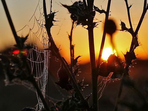 sky sun sunrise photography dawn topf50 bravo topv999 topv222 cobweb algo thistles cubism naturesfinest 50f golddragon anawesomeshot 200850plusfaves thperfectphotographer
