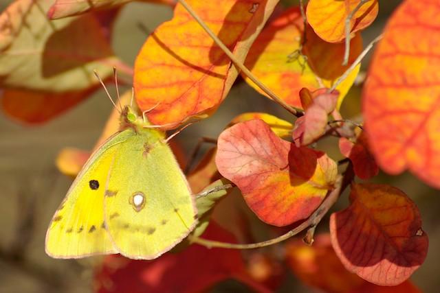 hidden on a yellow leaf