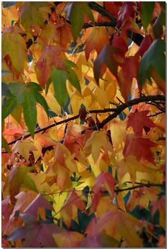 Autumn - 2008 [1]