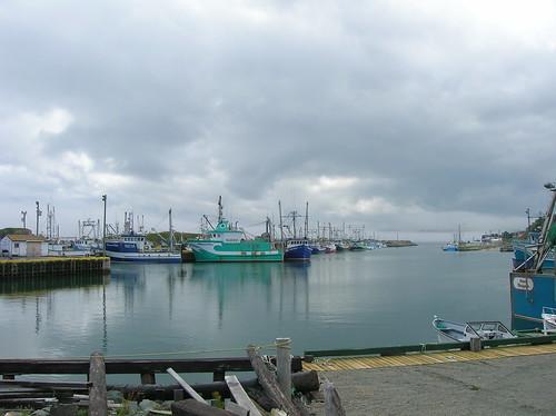 ocean life wild canada nature america newfoundland coast atlantic east maritime northern province