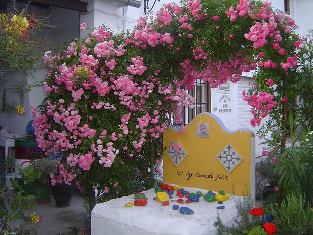 Alameda-(Málaga)-piedras de colores y rosas-