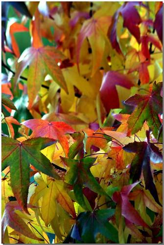 Autumn - 2008 [3]