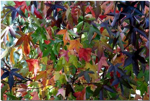 Autumn - 2008 [5]
