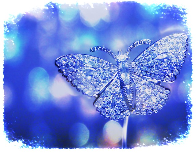 Winter butterfly