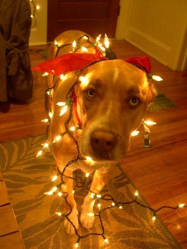 Christmas Dog | by nica456