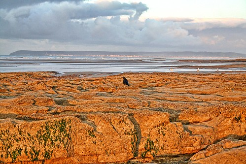 uk sea england seagulls seaweed beach clouds seaside sand unitedkingdom eastbourne crow beachyhead bexhill sovereignharbour coastuk larigan phamilton goldstaraward welcomeuk