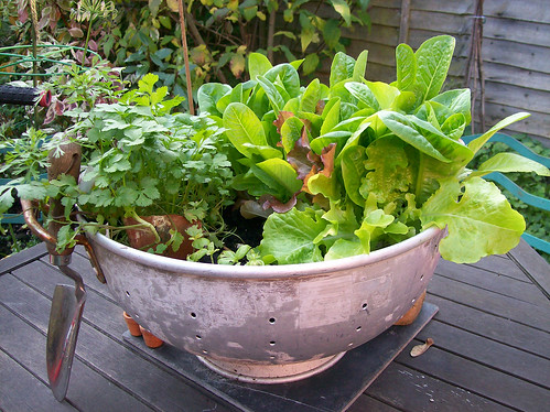 Salad bowl | by Katy's Clutter