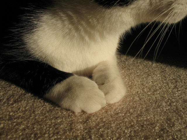Oliver's Chin and Paws