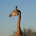 South Africa / Kruger NP