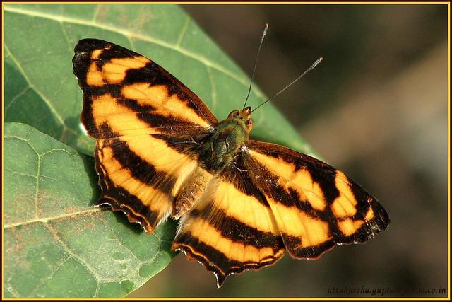 Butterfly ???