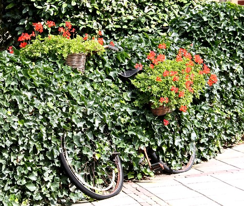 I didn't know we were growing bicycles dear