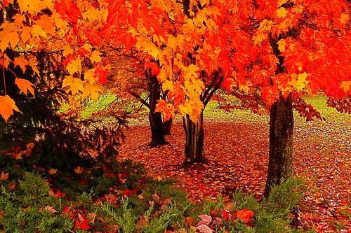 leica autumn trees fall leave landscapes maryland brightcolors scenics dlux brilliantcolors smorgasbord southernmaryland goldenglobe supershot calvertcountymaryland leicadlux3 flickrenvy naturewatcher betterthangood huntingtownmaryland flickrbestpics nikonflickrawards
