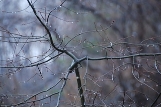Raindrops on Branches 2 | by JDMpress