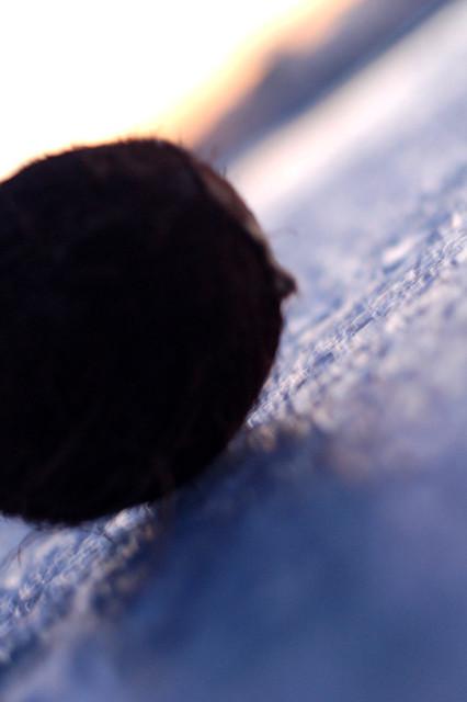 random frozen coconut #2