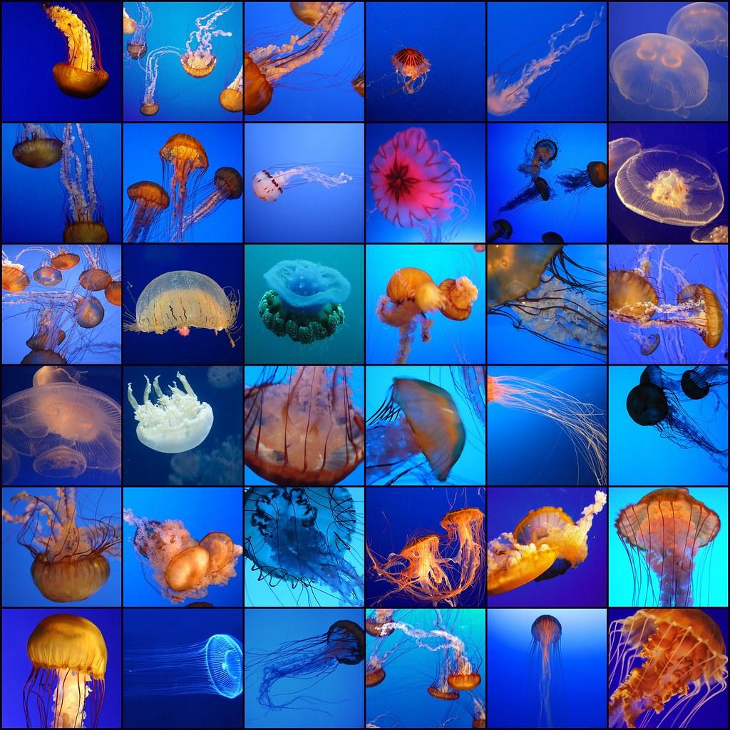Jellyfish mosaic