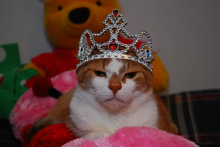Feline Royalty   by Event Essentials Photography & Decor