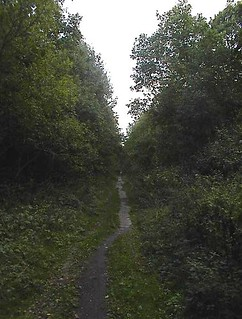 Forest Near Home, 6 Dessau Germany