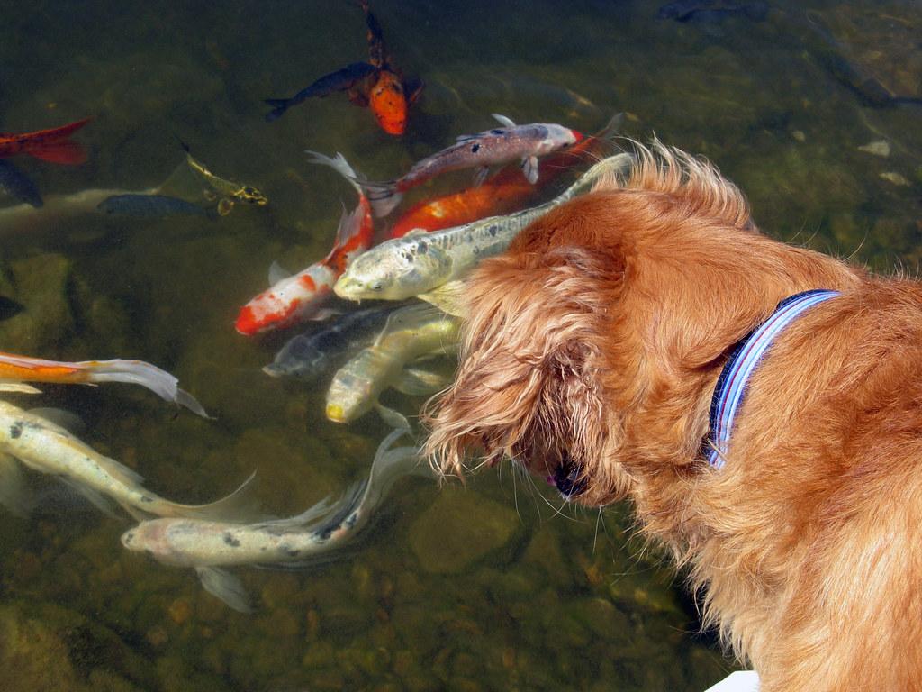 Jackpot Eyes the Fish