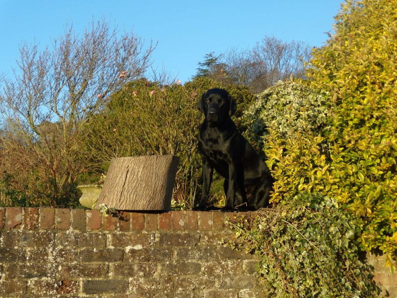 Dog on wall Guildford Circular