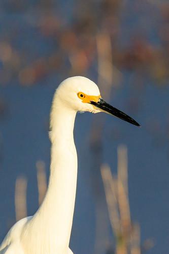 sunset bird florida wildlife egret merrittisland