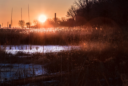 frozen marsh michigan midmichigan lake huron baycity statepark mi sunrise backlight rimlight canoneos5dmarkiv glowing dusters weeds trees sun sol