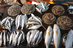 fish market, fort kochi | by djbones