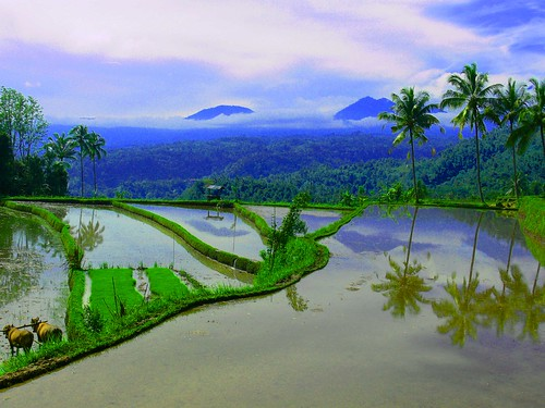 Food for the future, Organic farming takes root in post-bomb Bali by BALIwww.com