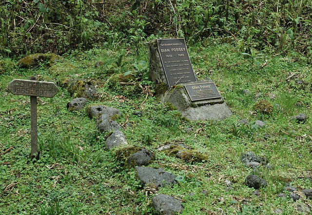 Grave of Dian Fossey and Digit
