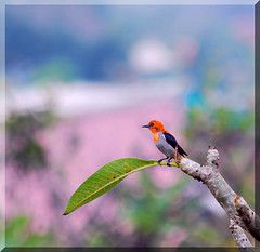 Beautiful Bird Up High in the Tree   by BEST PHOTO
