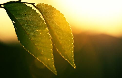 toronto leaves sunshine sunrise nikon flare d40 55200mmvr blogtoff20081121