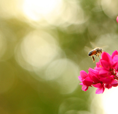 in the key of...bee! (imagoism thursday 26) | by jmtimages