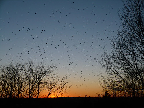 sunset birds manhattan ks hill flock kansas