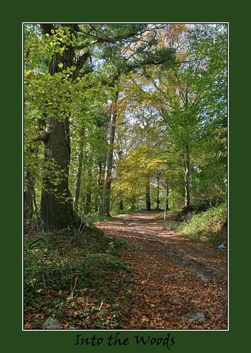autumn forest woods llanelli glade bigmomma stradeywoods yourock1stplace pregamesweepwinner