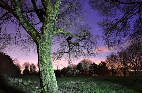 park trees winter england tree field night stars twilight branch nocturnal dusk branches january hampshire planet jupiter shining gemini basingstoke 2014 loddonvalley brightonhill hatchwarrenpark