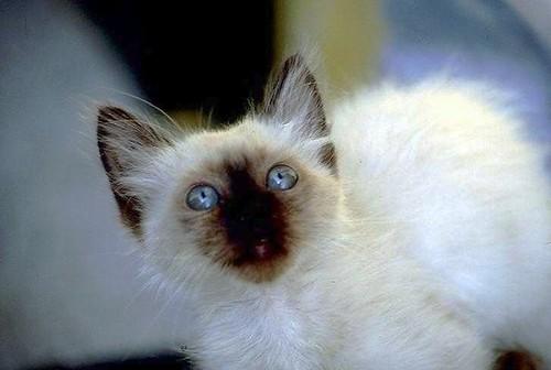 Blue eyes | by Cristina Negrini