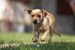 My little dog | by -=RoBeE=-