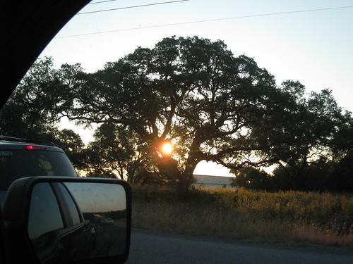 sun tree sunrise onthewaytowork project365 project366 274366