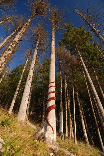 Land Art - Enroulement marron