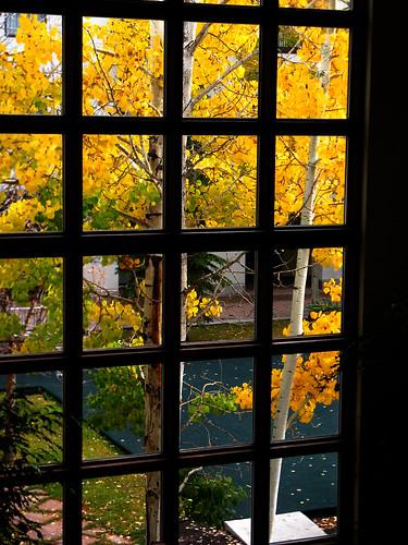 trees usa ski tree fall window leaves colorado view vail co birch gord i70 mckenna gordmckenna