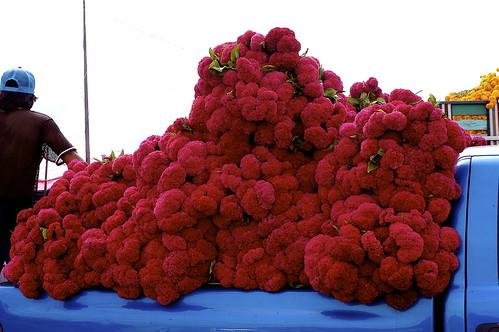 Mercado de las flores (los coyotes son los ganones)