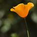 A walk to the UC Berkeley Botanical Garden
